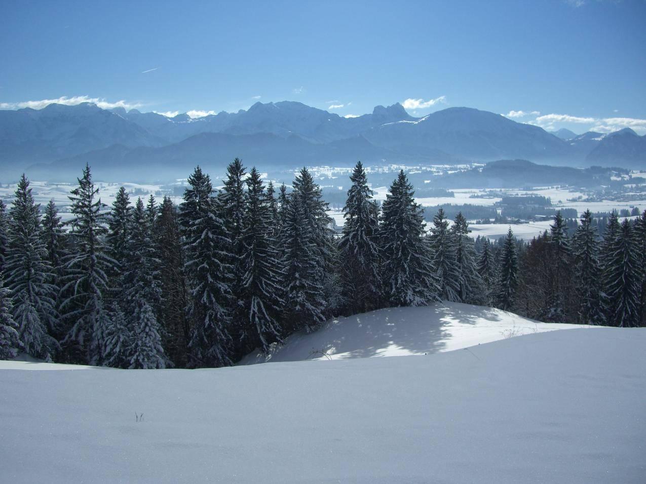 阿尔卑斯山的针叶林与山峦