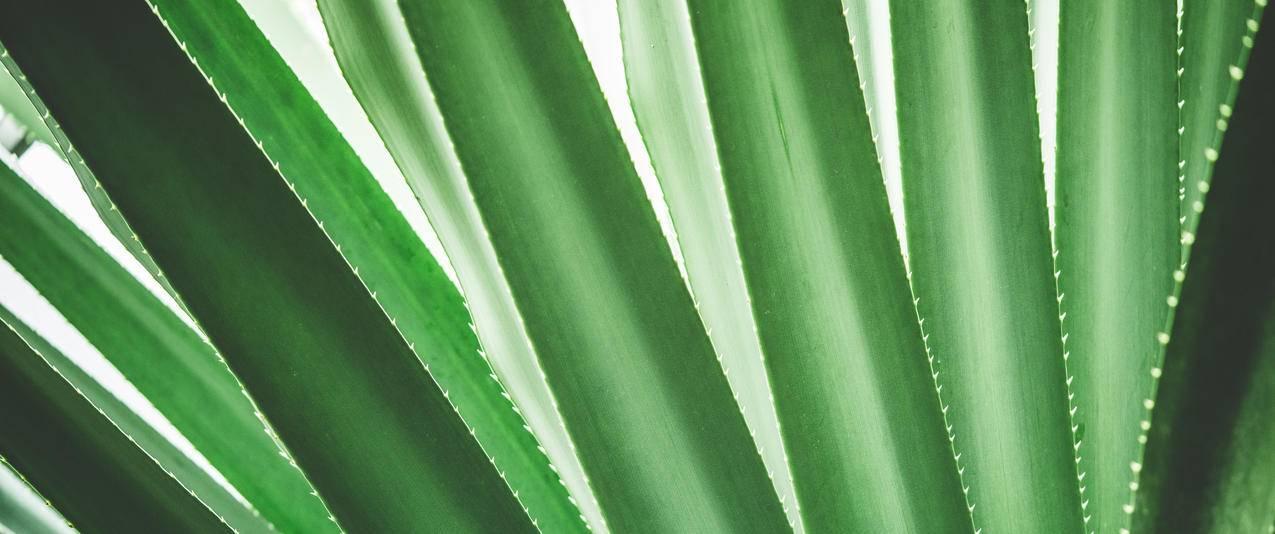 热带植物特写,简约背景3440x1440壁纸
