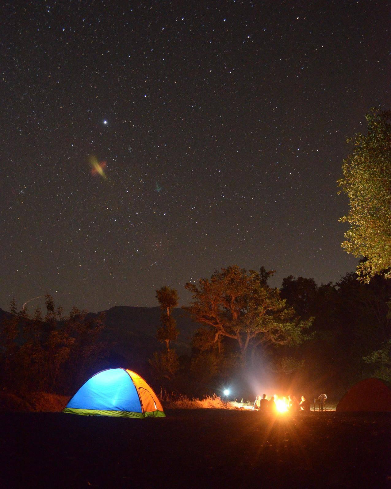 Blue和黄灯穹顶帐篷在夜间被植物包围的高清图片
