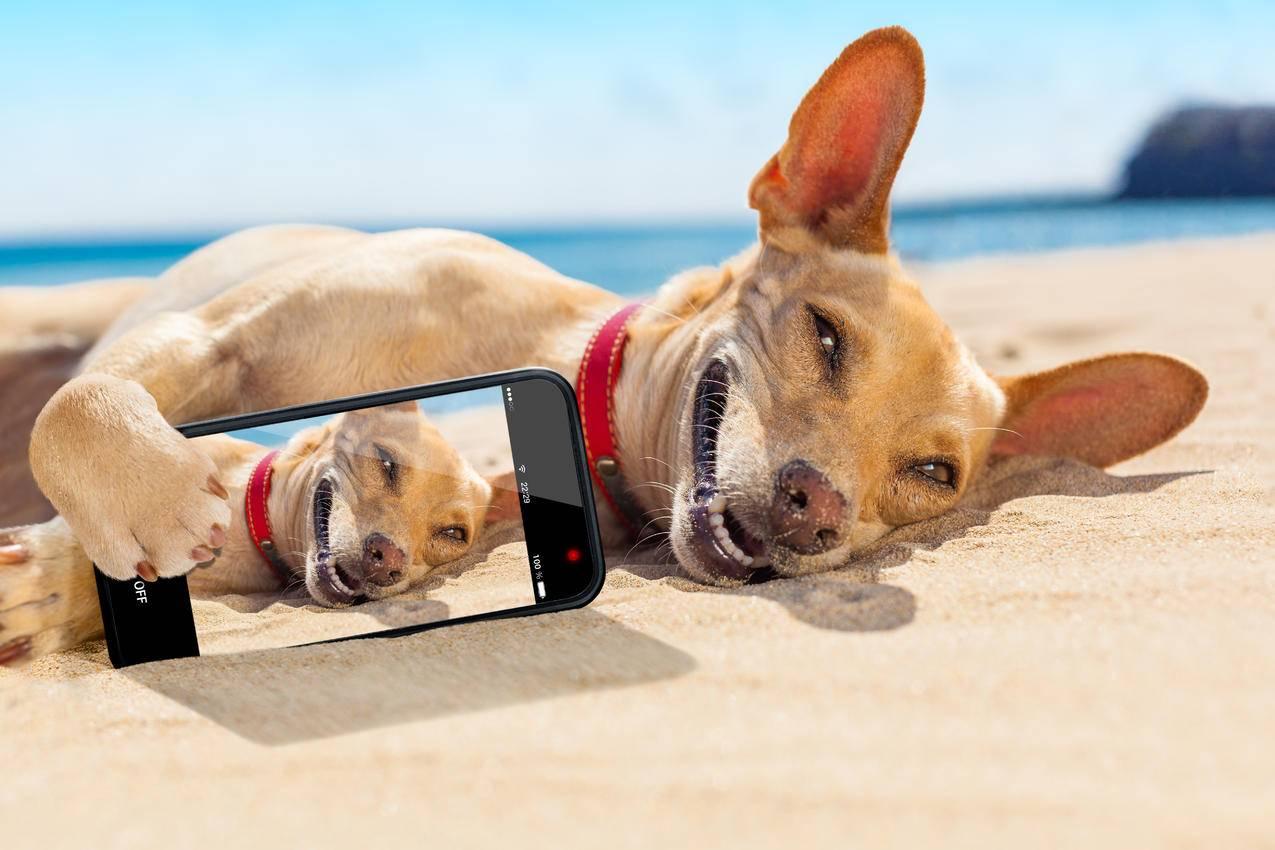 沙滩上可爱的狗狗,手机自拍小狗5K壁纸