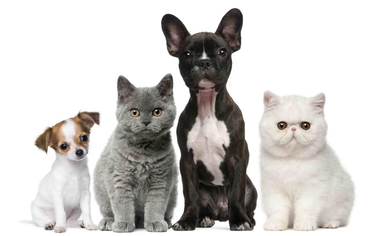 动物,猫和狗,8K壁纸