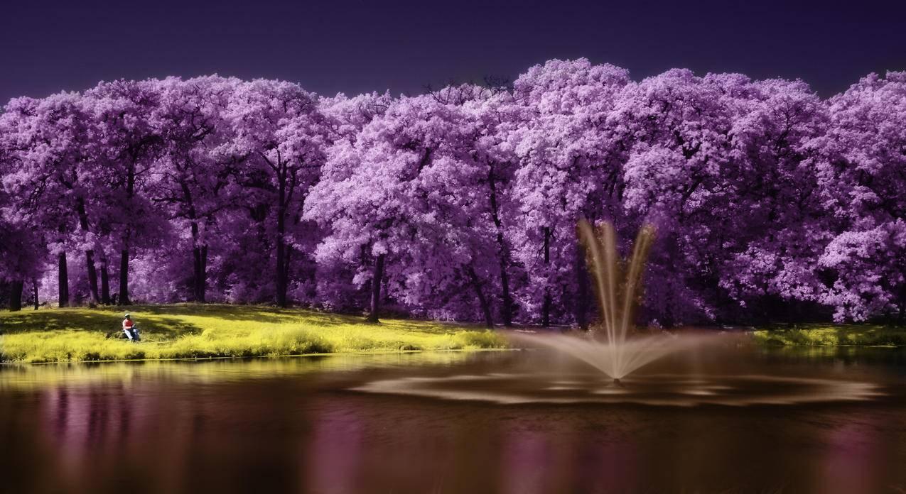 树,湖,紫色风景,唯美艺术,4K壁纸
