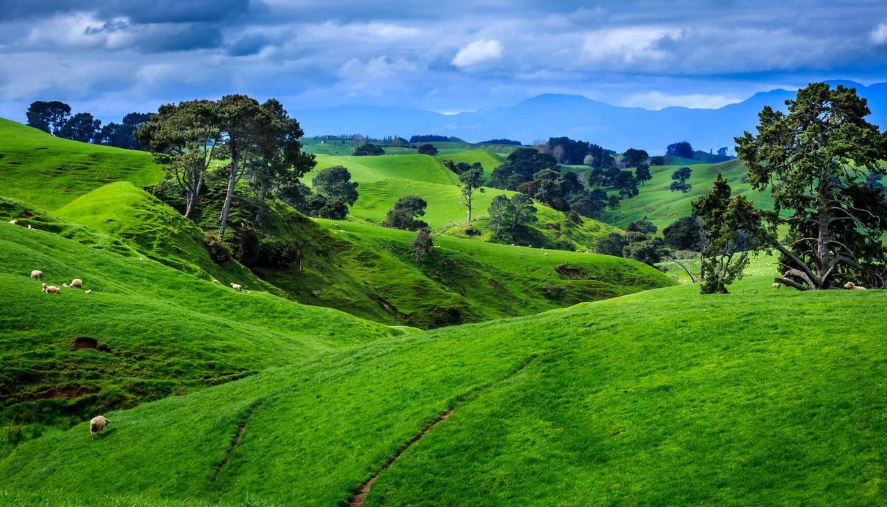 新西兰,田野,牧场的风景4K壁纸