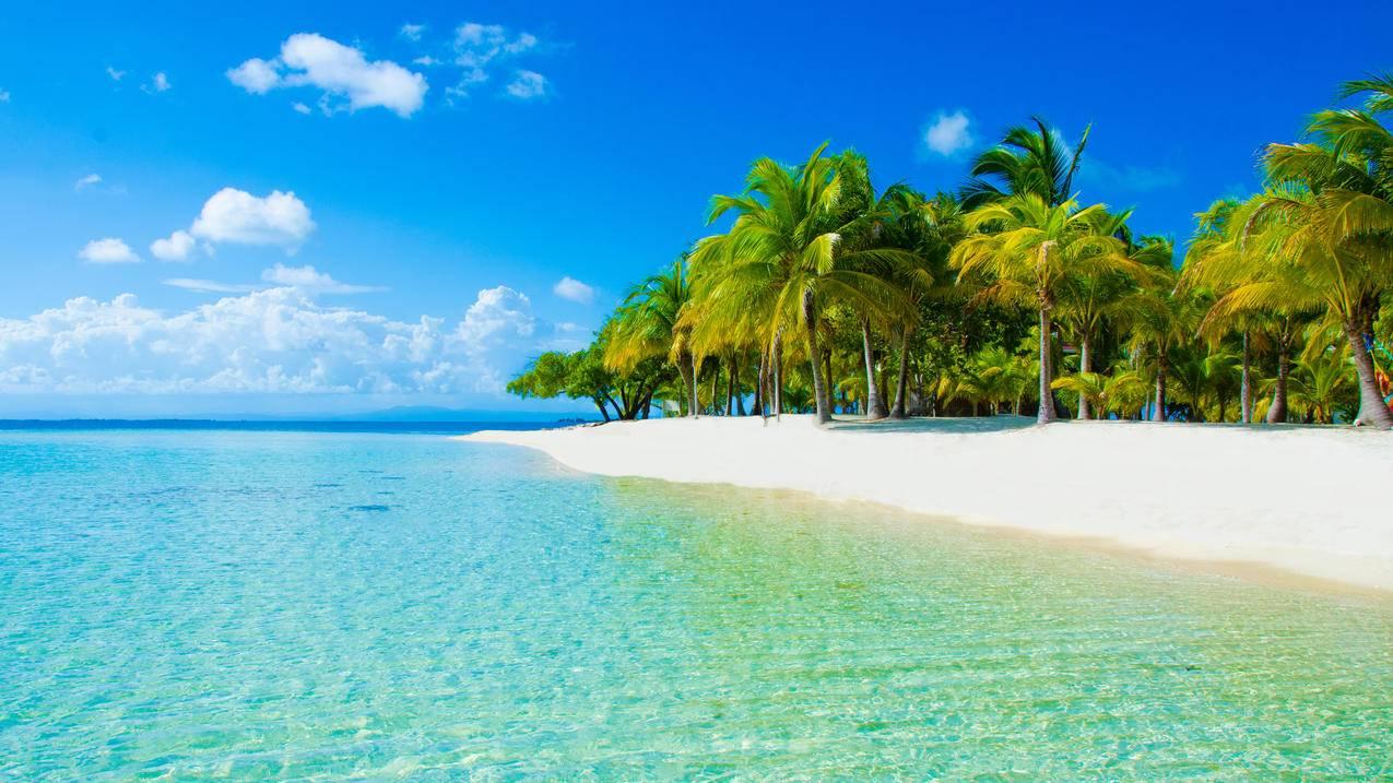 棕榈树,自然,天空,云,沙子,4K海边风景壁纸