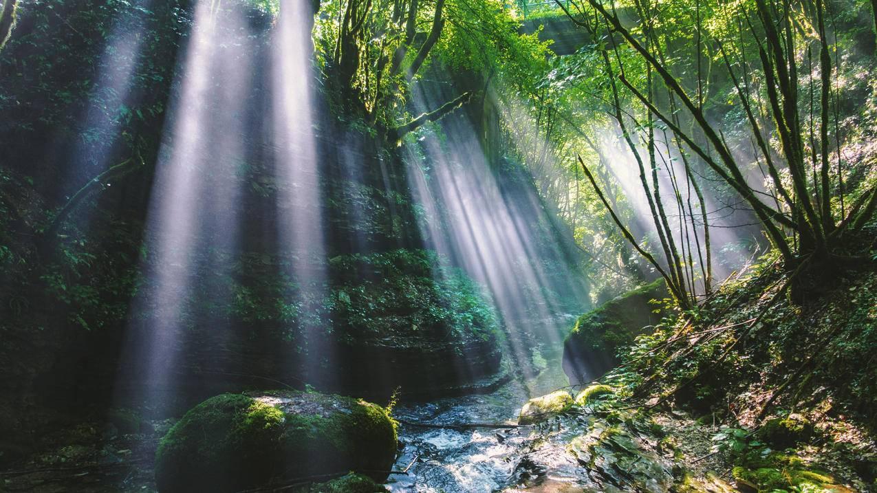 森林 树木 山谷 阳光 岩石 4k风景壁纸3840x2160 千叶网