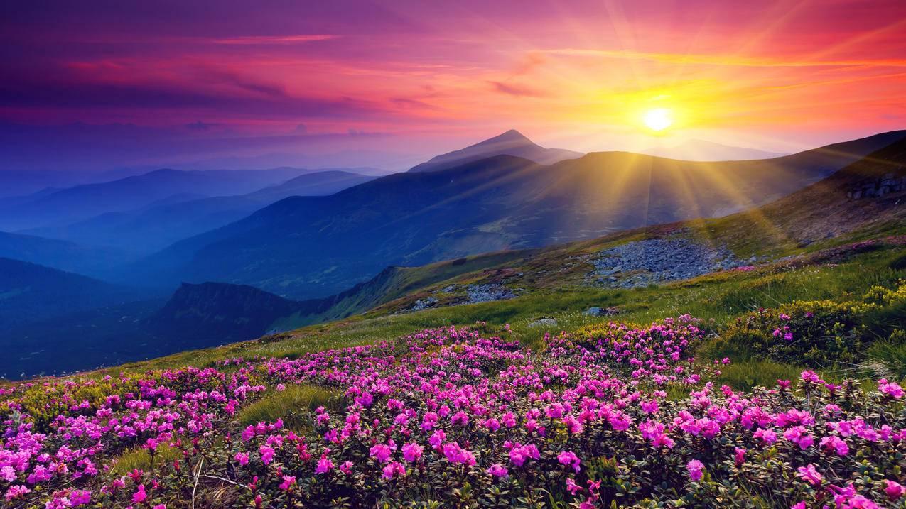 青山绿水,鸟语花香,黎明,太阳,4K风景壁纸
