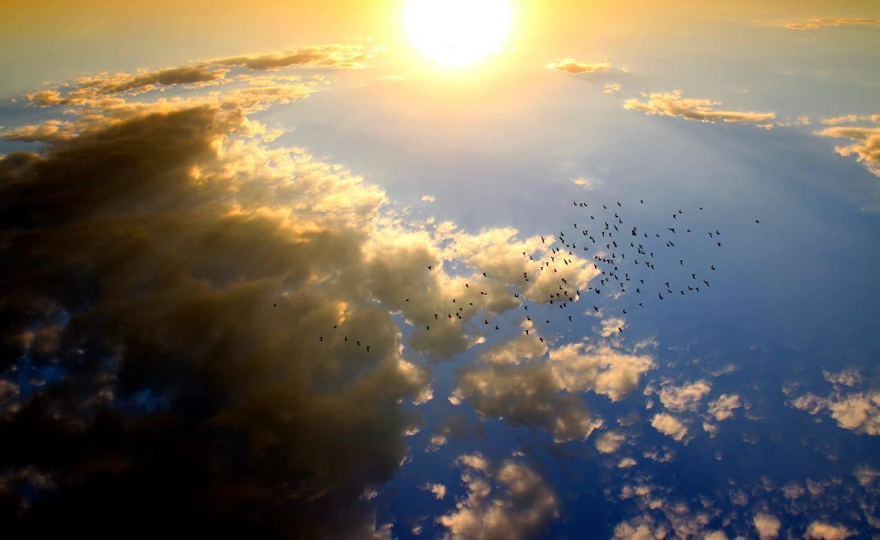 日落,鸟,云,太阳,天空,5K风景图片