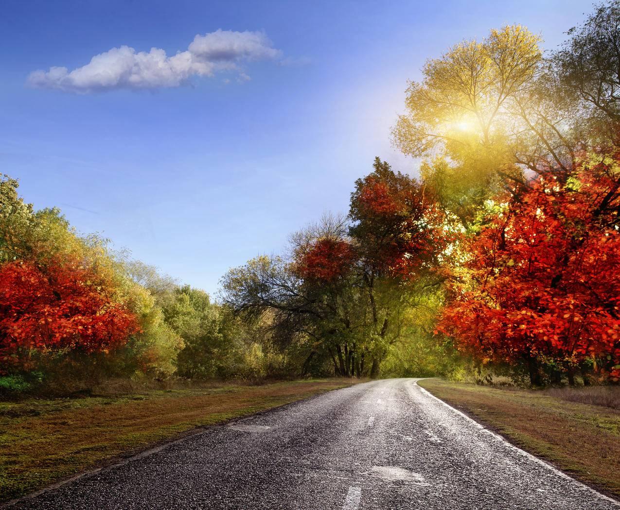 自然秋天的树叶4K风景图片
