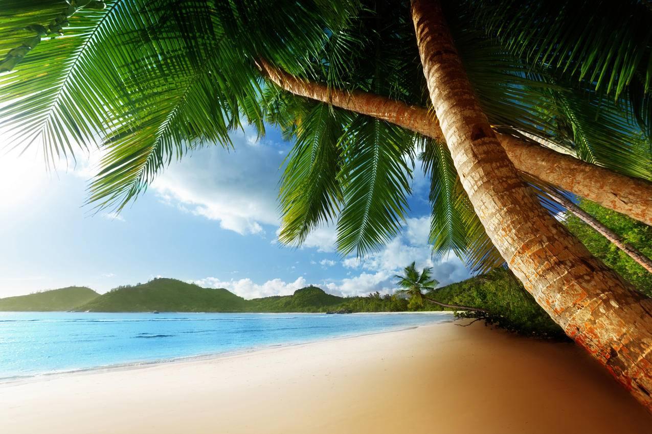加勒比海,天空,云,棕榈树,4K风景壁纸