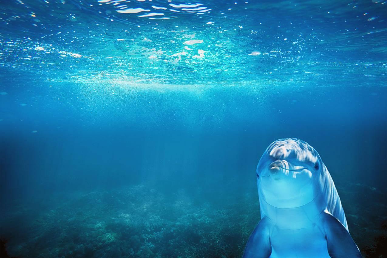 蓝色海洋 海豚 动物7k图片