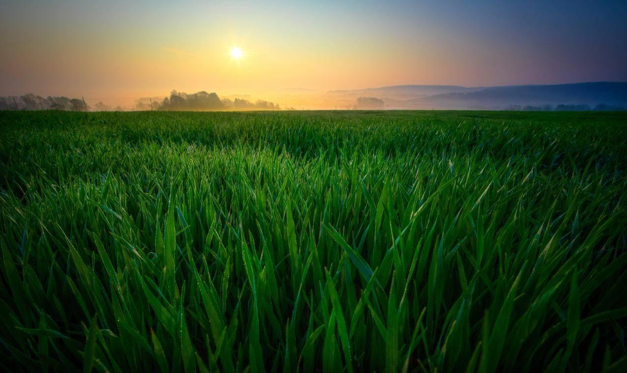 日出,雾,太阳,上午,黎明,绿色植物,6K风景图片