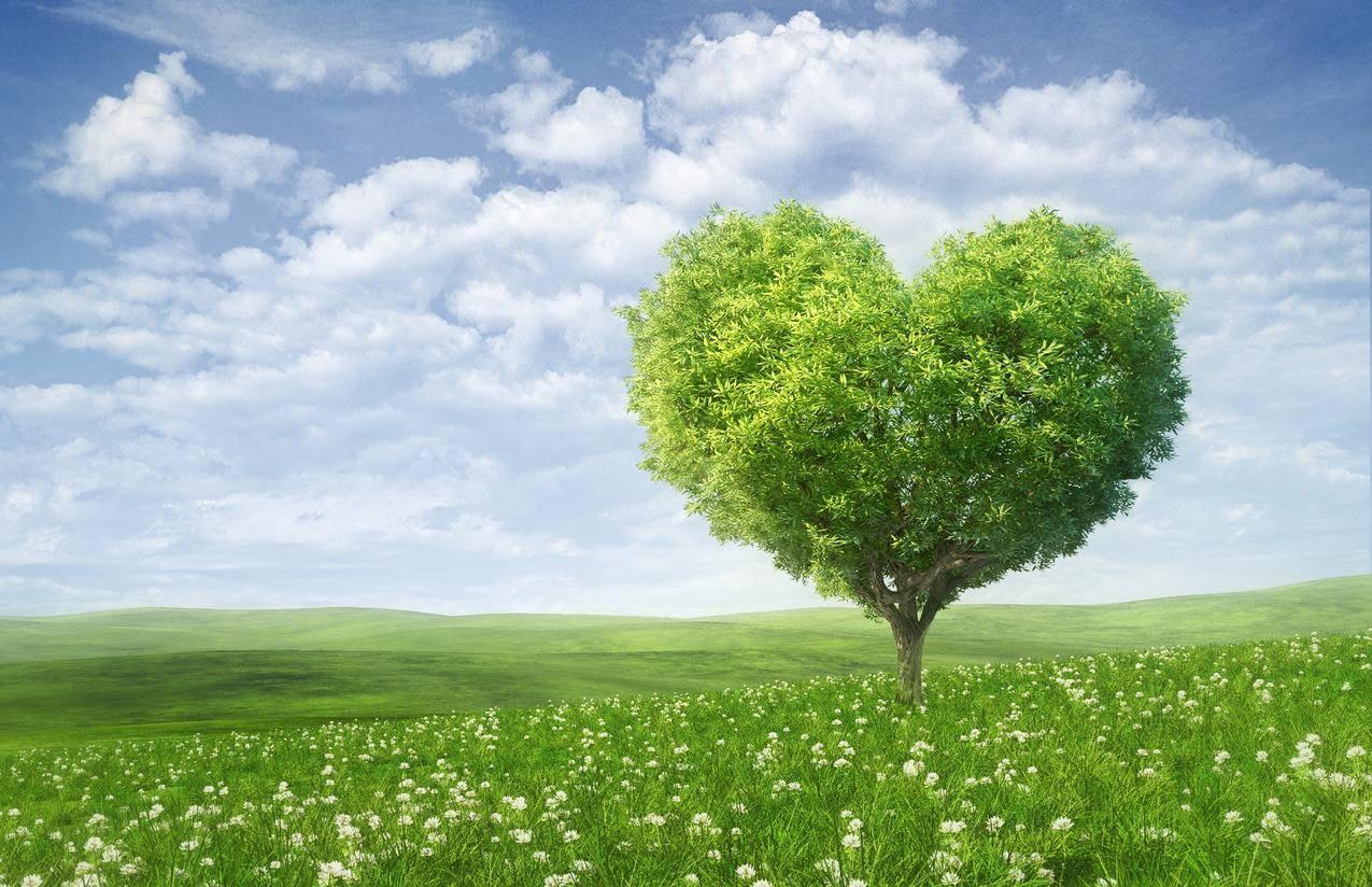 心形树,爱心树,情人节,爱情,浪漫,绿色的田野,5K风景壁纸图片