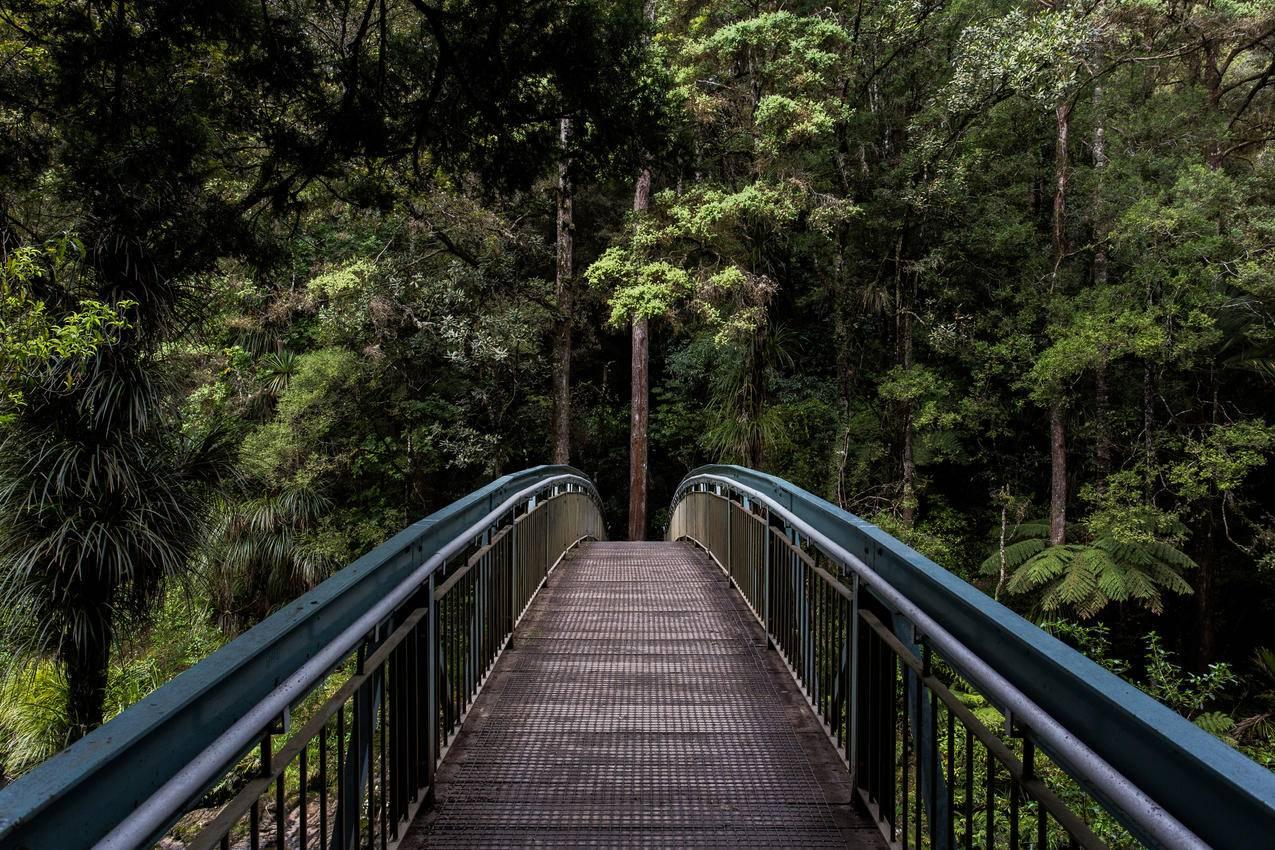 卡皮拉诺吊桥公园4K风景图片壁纸
