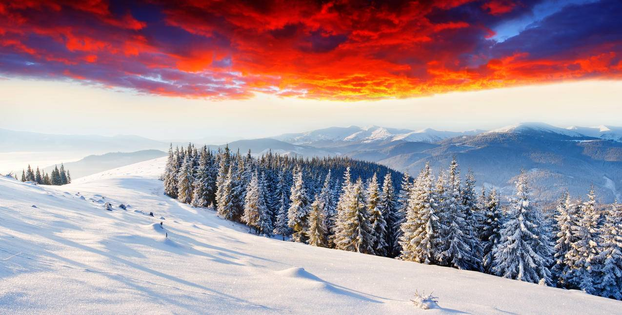 树林,冬季,黎明,辉光,6K风景图片