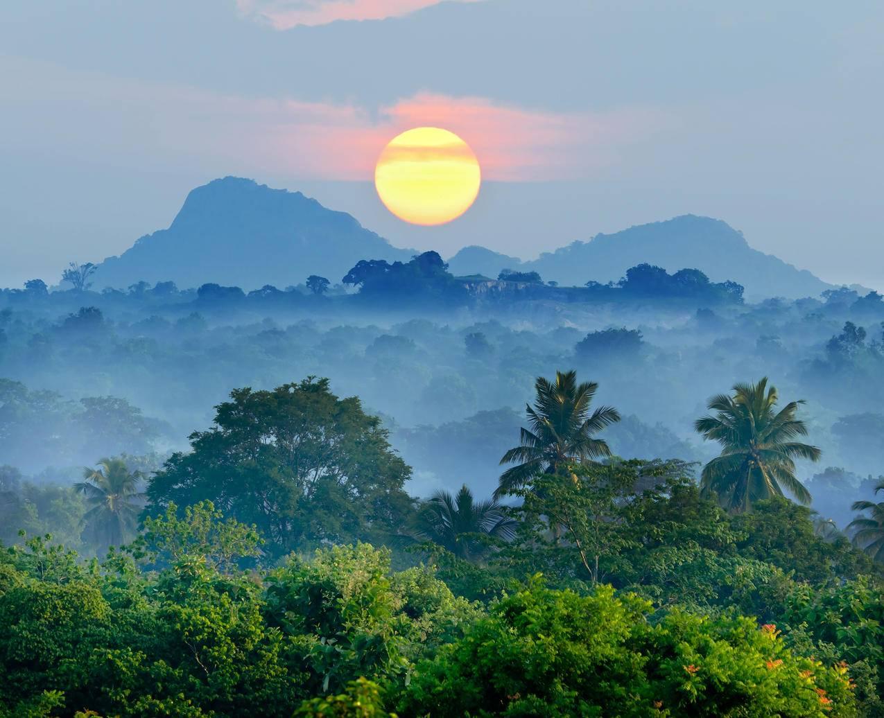 热带,森林,雾,美丽的日出,4K风景壁纸