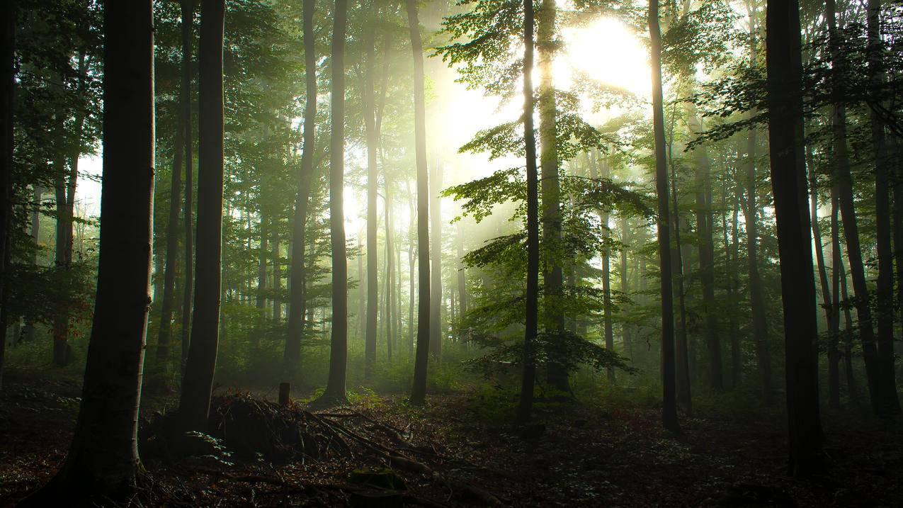 德国瓦尔登布赫,斯图加特附近的森林,早晨雾,3840x2160风景壁纸