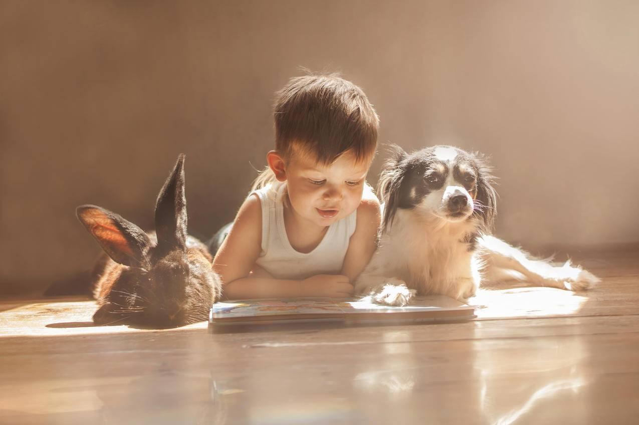 男孩,兔,狗,朋友,4K图片